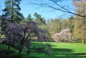Les cerisiers du Parc Orientatal